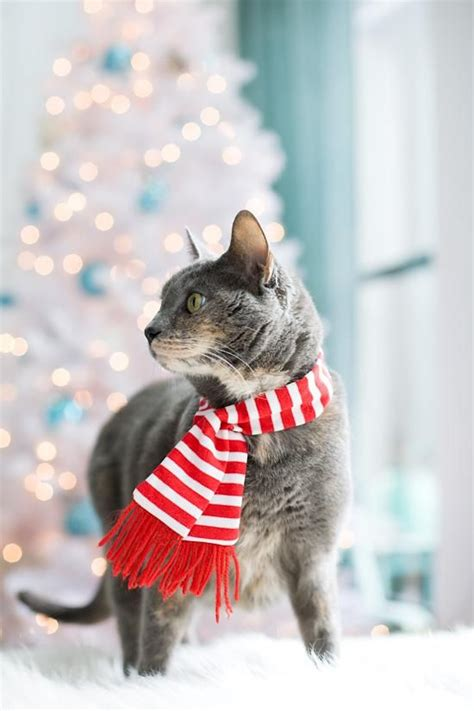 dapper christmas cat wuvely