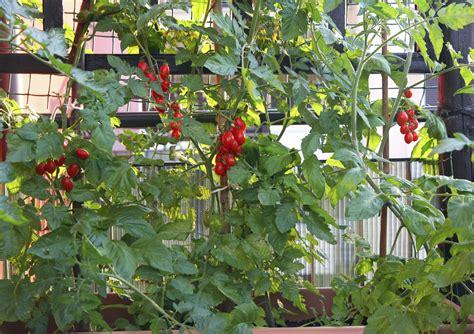 lombrichi nei vasi come coltivare l orto in casa non specare