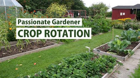 Vegetable Garden Crop Rotation Vegetable Families Crop Rotation In A Small Garden