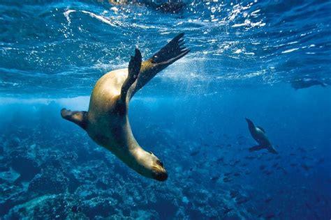 imagenes de la vida marina diez lugares para aprender sobre la vida marina incre 237 ble