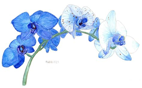 i painted some blue orchids watercolor