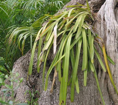 orchidea non fiorisce condividi