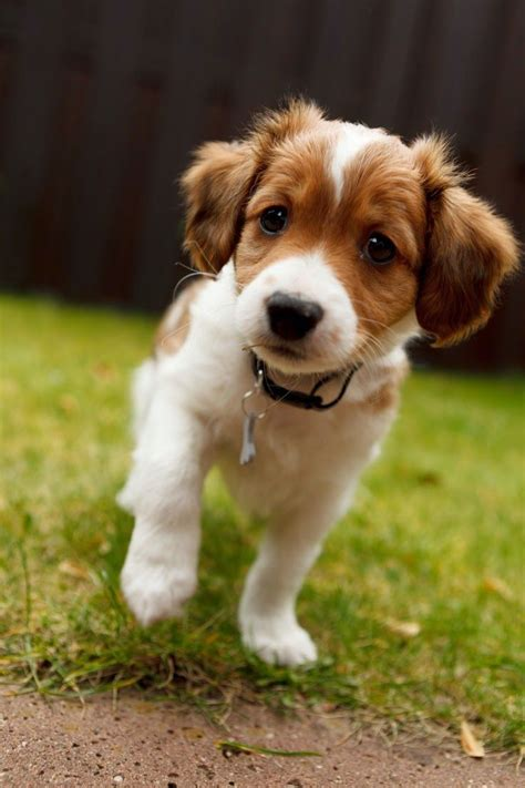 puppy breed 25 best ideas about cutest breeds on puppies puppies a puppy and puppies