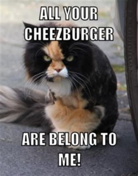 Ugly Cat Meme - gallery for gt ugly cat memes