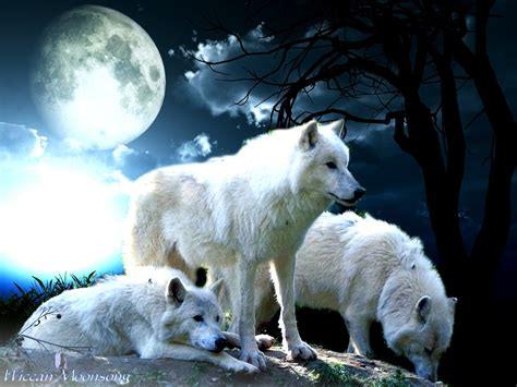 wolf s wiccan moonsong the wolf pack creed in celebration of