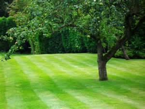 garden images garden maintenance sandbach mws garden services