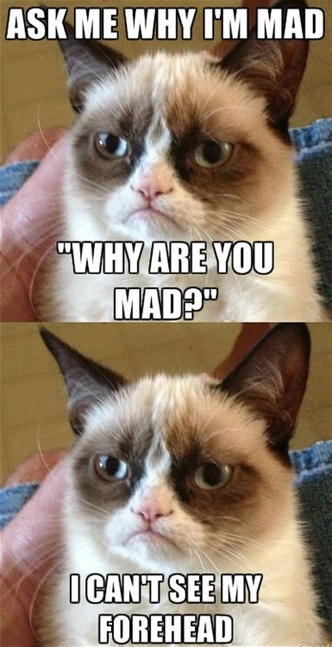 Sassy Cat Meme - 27 best sassy cats images on pinterest funny animals