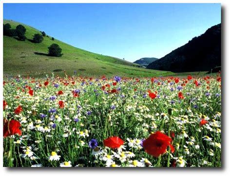 meteo co fiori valdisotto corso sui fiori di bach per conoscere s 233