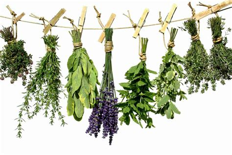 hanging herbs inspiring and insightful articles to powerfully shape your future energy therapy