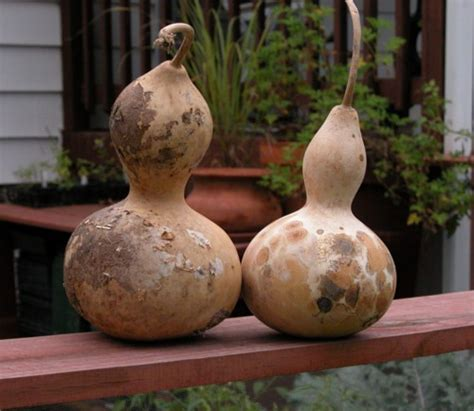 bird house gourds gourds urban farmer