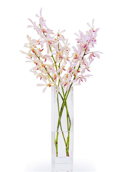 pink orchid in vase photograph by atiketta sangasaeng