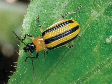 pest in garden daily harvest farm the and bad of garden bugs