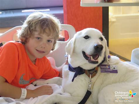 for dogs to be a therapy volunteer with the therapy program chla