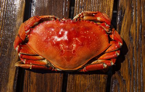 Whats In Season Dungeness Crabs by Price Talks Further Delay Dungeness Crab Season In
