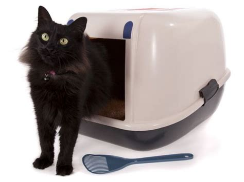cassetta gatto cassette igieniche accessori per gatti
