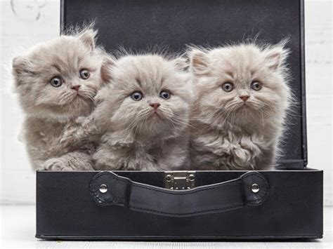 kitten themed names 25 travel themed dog and cat names travel channel
