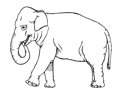 thailand elephant coloring page coloring pages elephant bestappsforkids com
