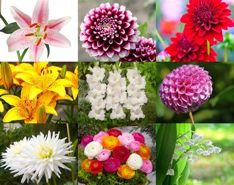 Fleurs De Printemps by Les Principaux Bulbes De Fleurs De Printemps Et D 233 T 233