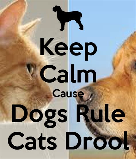 dogs rule keep calm cause dogs rule cats drool keep calm and carry on image generator