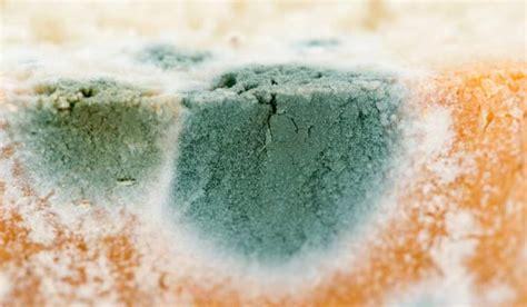 Obat Pembasmi Jamur Di Dinding mengapa roti berjamur penyebab jamur pada roti