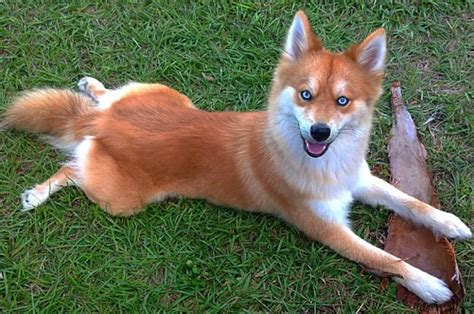 mixed breeds 19 mixed breed dogs you won t believe are real