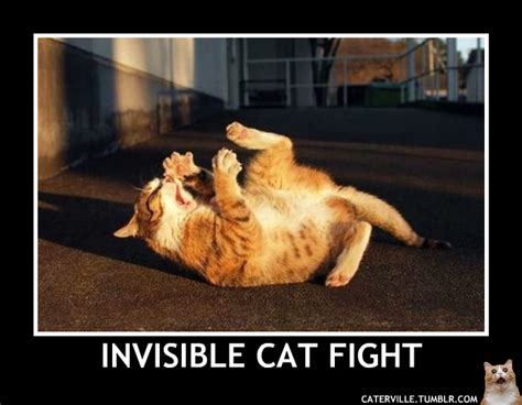 Invisible Cat Memes - random invisible cat stuff caterville