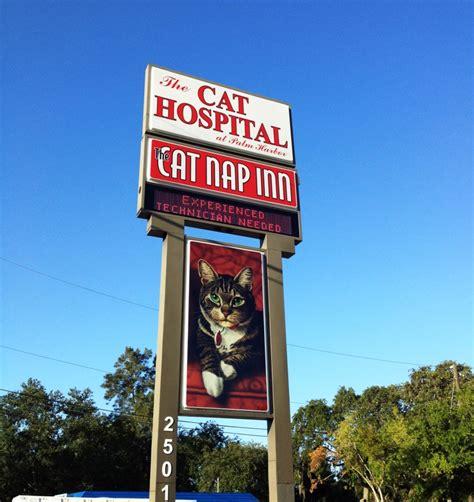 canapé inn the cat nap inn cat hospital palm harbor florida