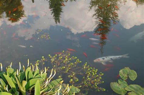 pesci volanti mediterraneo arco flora parco arciducale arboreto di arco anto s