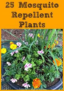 25 mosquito repellent plants for your garden happily