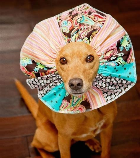puppy cone 19 creative pet cones that your pet is sure to even more