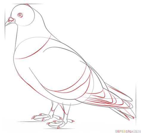 doodle how to make pigeon how to draw a pigeon step by step drawing tutorials