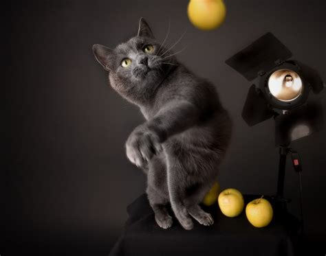 koleksi gambar kucing  menarik weird  fun ideas