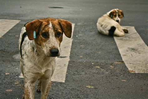 abandoned dogs stray abandoned dogs dog lover s news
