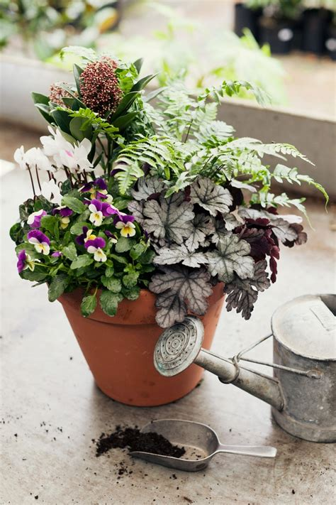 herb container garden combinations 1000 images about container garden and plants on