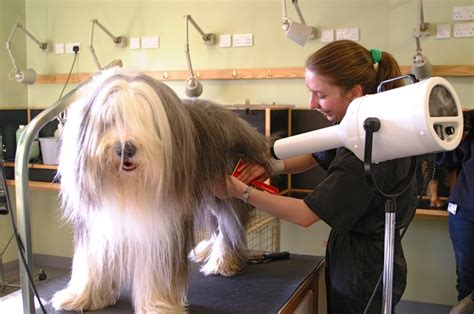 dog groomers that come to house how to groom a dog hirerush blog