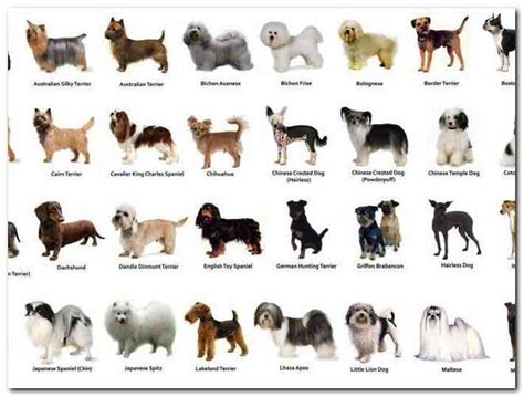 doge type of types of small breeds pictures reference