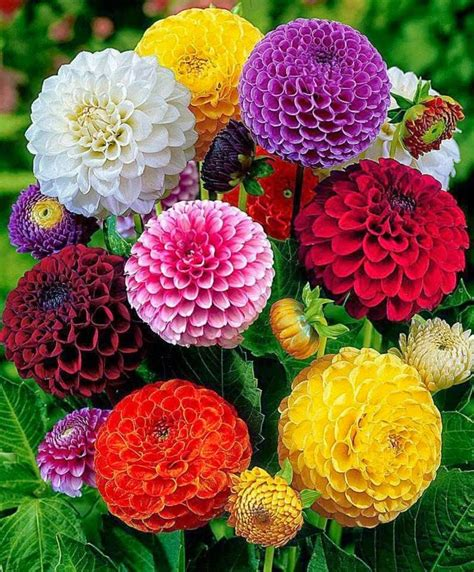 Beautifull Flower Lq أجمل الزهور الملونة موسوعة الصور