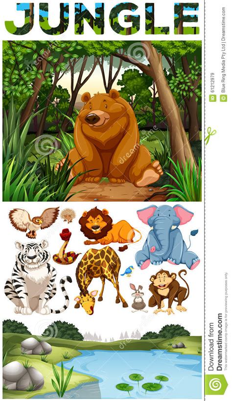 imagenes animales que viven en el bosque animales salvajes que viven en la selva ilustraci 243 n del