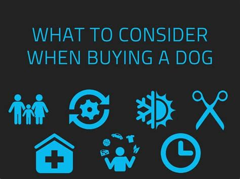 what to buy for a new puppy what to consider when buying a newdoggy