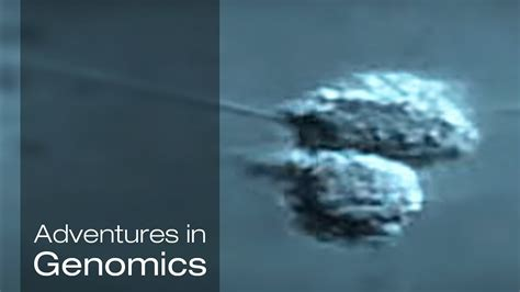 illumina inc sequencing the single cell adventures in genomics