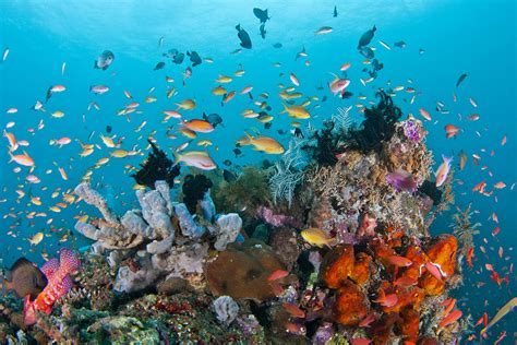 flores discovery hidden treasure  east indonesia