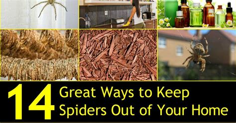 how to keep house 14 great ways to keep spiders out of your home naturally