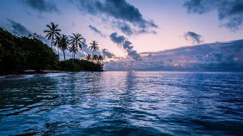 body  water  coconut trees mac wallpaper