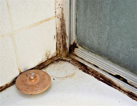 removing mold from bathroom walls tips to remove mold from bathrooms after a flood