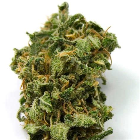semi cannabis semi top 44 femminizzati high supplies