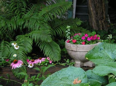 Flowers Shade Garden Shade Garden