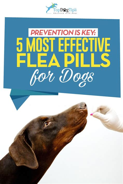 flea for dogs top 6 best flea pills for dogs in 2018 based on safety and efficacy