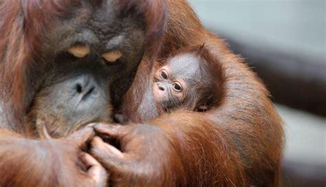 imagenes animales con sus crias cuida de ellos que necesitan de ti la crias de animales