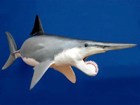 imagenes de animales extinguidos los animales extintos m 225 s impresionantes de la historia