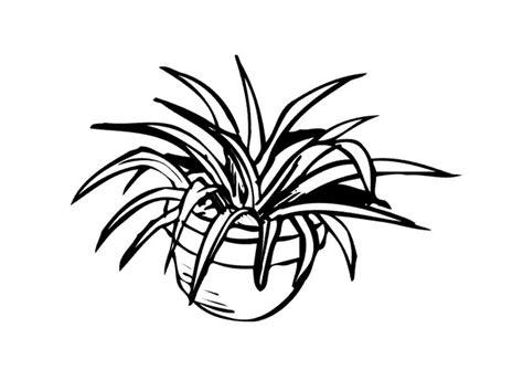 disegno interni disegno da colorare pianta da interno cat 9646